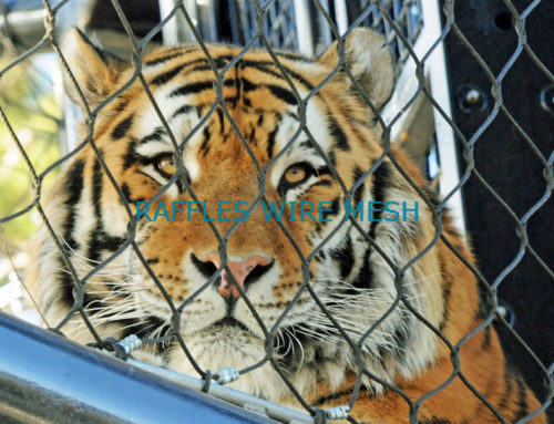 TIGER ENCLOSURE CAGE CASE