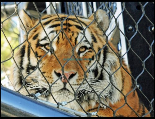TIPS FOR SELECTING THE RIGHT TYPE OF ZOO FENCES