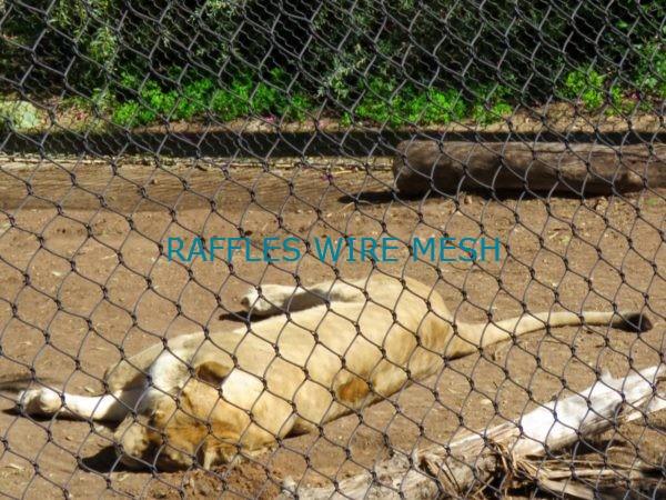 Zoo Mesh Lion