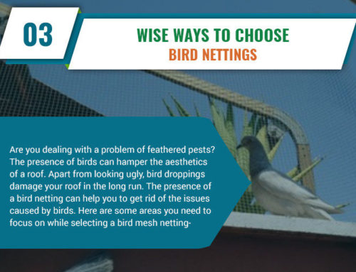 Infographic: Vital Factors To Remember While Looking For A Bird Netting